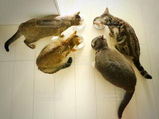 鏡の前に立っている猫の写真・画像素材[910471]