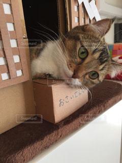 ボックスに座って猫の写真・画像素材[930301]