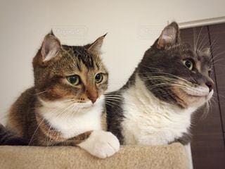 横になって、カメラを見ている猫の写真・画像素材[933294]