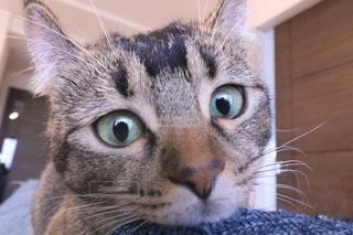 近くにカメラを見て猫のアップの写真・画像素材[937659]