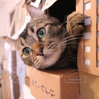 ボックスに座って猫の写真・画像素材[937660]