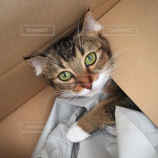 ボックスに座って猫 - No.957400
