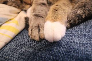 ベッドの上で横になっている猫の写真・画像素材[964552]