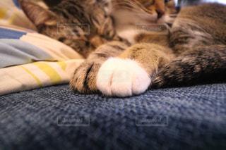 ベッドの上で横になっている猫 - No.965091