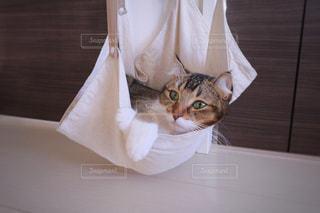 ベッドの上に座っている猫の写真・画像素材[965093]