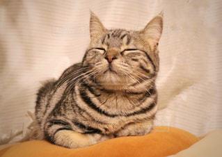 ベッドの上に座っている猫の写真・画像素材[967598]