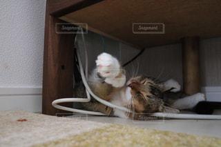 ベッドの上で横になっている猫の写真・画像素材[984813]