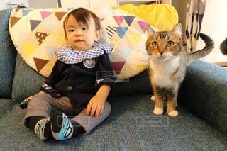 小さな子供は猫を持ってください。 - No.984815