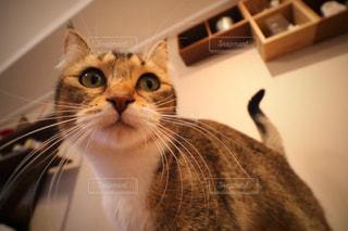 カメラにポーズを鏡の前で座っている猫の写真・画像素材[985043]