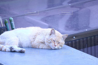 テーブルの上に横たわる猫の写真・画像素材[988341]