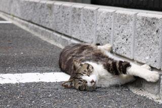 歩道の上に横たわる猫 - No.988347