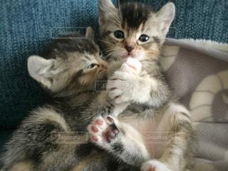 近くに猫のアップ - No.989838