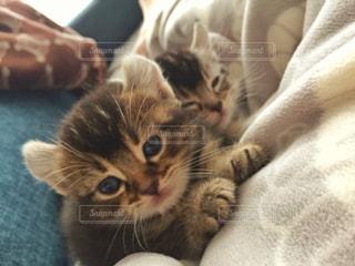 ベッドの上で横になっている猫 - No.989839