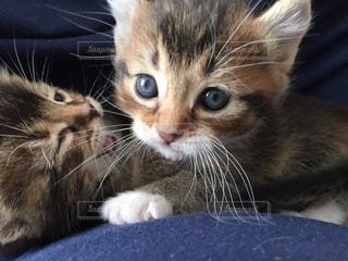 近くに猫のアップの写真・画像素材[989840]