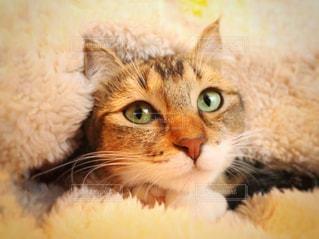 近くに猫のアップの写真・画像素材[1006361]