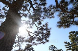 近くの木のアップの写真・画像素材[1009546]