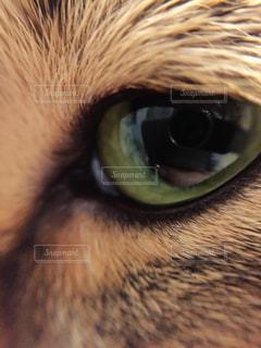 チャバの目の写真・画像素材[1016517]