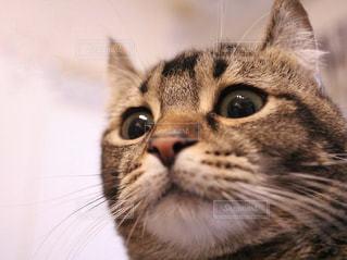 近くにカメラを見て猫のアップの写真・画像素材[1023622]
