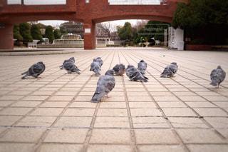 鳩の集いの写真・画像素材[1025402]