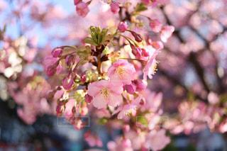 早めの春の写真・画像素材[1031853]