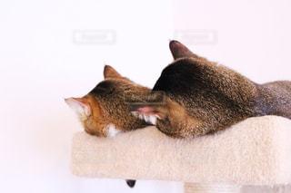横になって、カメラを見ている猫の写真・画像素材[1031855]