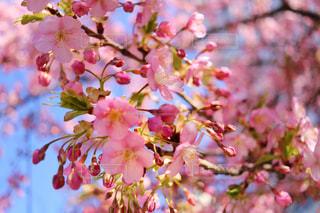 近くの花のアップの写真・画像素材[1031856]