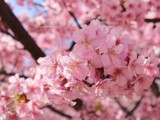 近くの植物にピンクの花のアップの写真・画像素材[1034518]