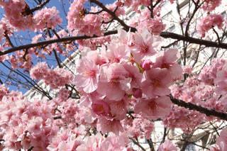 近くの植物にピンクの花のアップの写真・画像素材[1034520]