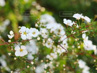 近くの花のアップの写真・画像素材[1053514]
