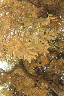 近くの木のアップの写真・画像素材[1054653]