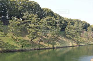 木々 に囲まれた水の体の写真・画像素材[1054680]
