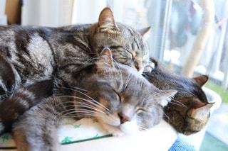テーブルの上に座って猫の写真・画像素材[1056413]