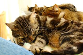 ベッドの上で横になっている猫の写真・画像素材[1064091]