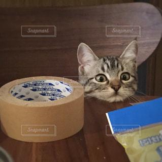 テーブルの上に座って猫の写真・画像素材[1070392]
