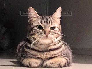 カウンターに座っている猫の写真・画像素材[1070977]