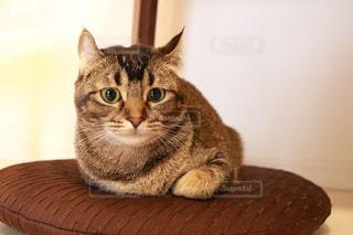 テーブルの上に座って猫の写真・画像素材[1072200]