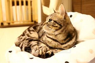 ベッドの上で横になっている猫の写真・画像素材[1072211]