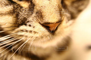 近くに猫のアップの写真・画像素材[1072212]