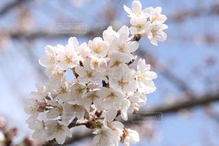 近くの花のアップの写真・画像素材[1080150]