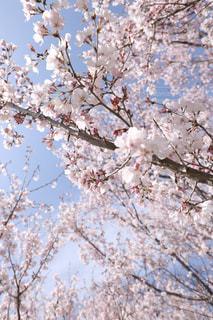近くの木のアップの写真・画像素材[1080151]