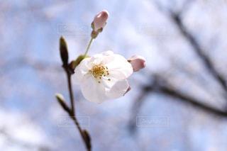 近くの花のアップの写真・画像素材[1080152]