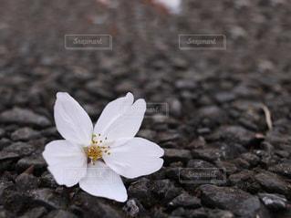 近くの花のアップの写真・画像素材[1080184]