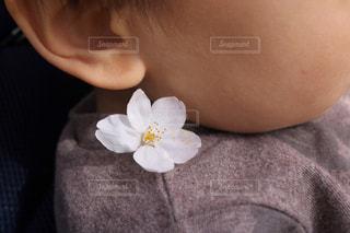 小さな春の写真・画像素材[1080186]
