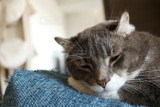 ベッドの上で横になっている猫の写真・画像素材[1083577]
