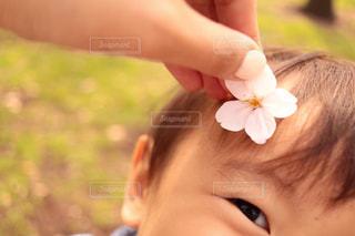 赤ちゃんの手の写真・画像素材[1085402]