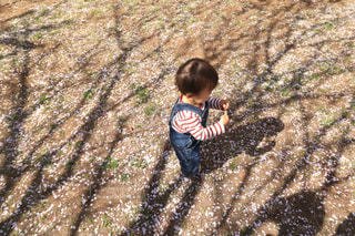 桜舞うの写真・画像素材[1094113]