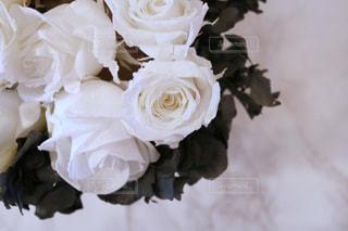 近くの花のアップの写真・画像素材[1114452]