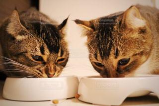 仲良くカリカリ食べるの写真・画像素材[1121061]