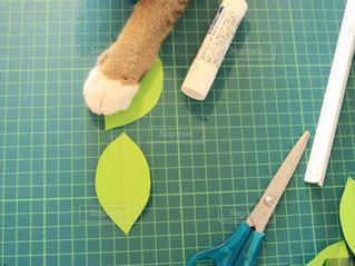 猫の手も借りたいの写真・画像素材[1128231]