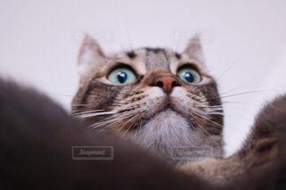 横になって、カメラを見ている猫の写真・画像素材[1132844]